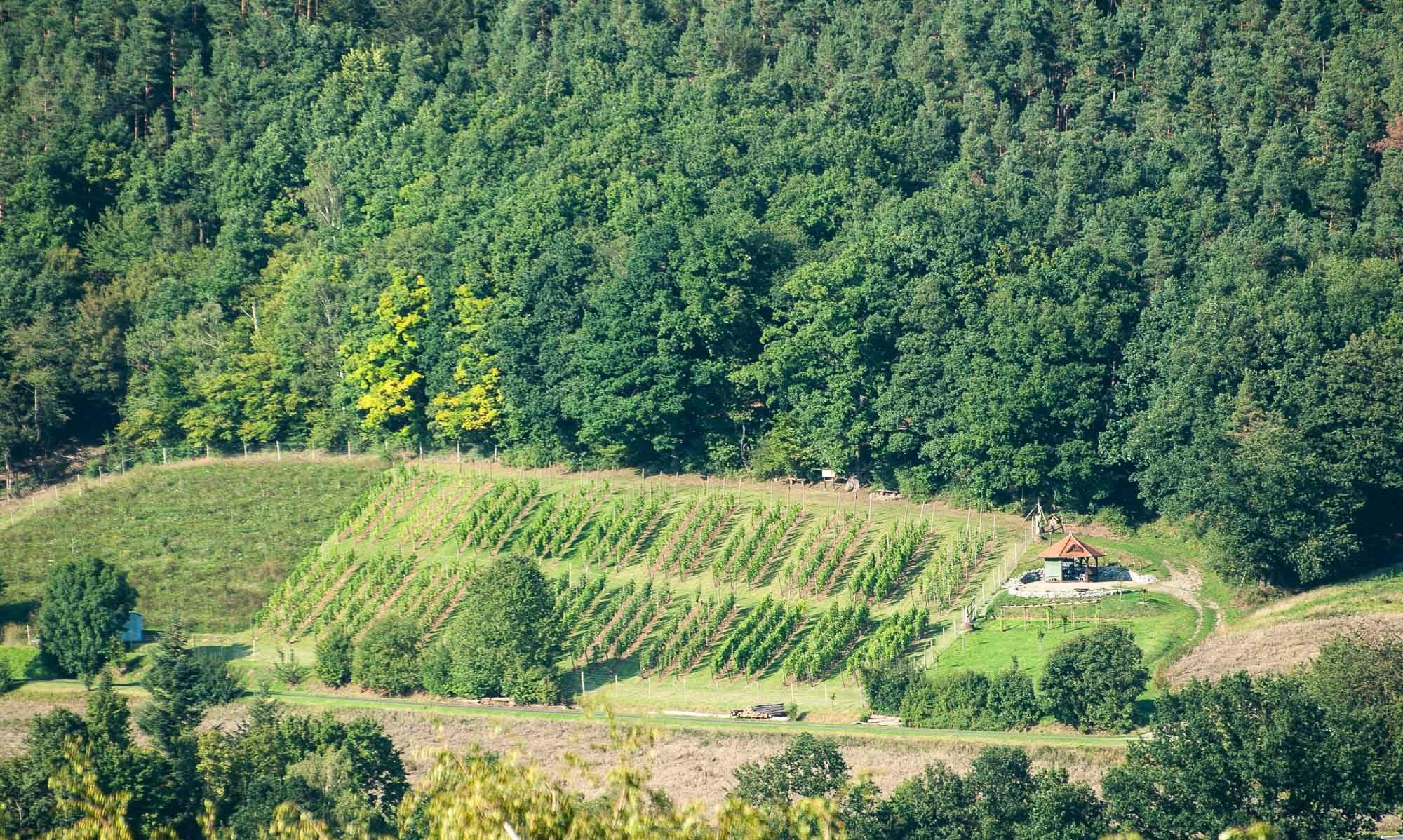 Rotenburger Weinfreunde